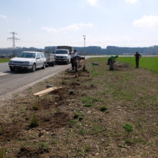 Anlage der Bepflanzung der Ortsumfahrung Regau im April 2018