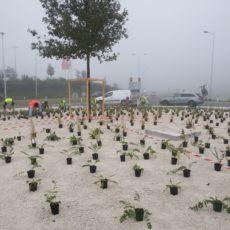 Pflanzungsarbeiten am Kreisverkehr Regau Ende September 2017