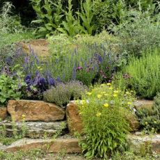 Natursteinmauer-mit-Wildblumen