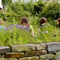 Rast-in-Wildblumenwiese-ueber-Natursteinmauer