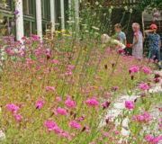 Wildblumen-Farbenbracht1