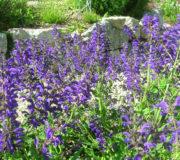 Wildblumen-Farbenbracht2