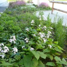 Wildblumenbeet NMS Seewalchen_Herbert Pointl