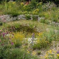 Wildblumenbeete-mit-Natursteinmauer-und-Feuchtmulde
