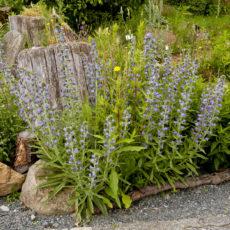 Wildes-Blumenbeet-mit-Totholz-und-Steinen