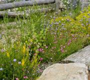 nachhaltigeWildblumen1