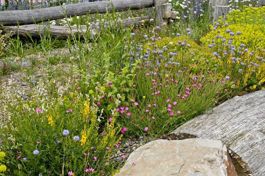 Wildblumen Im Garten