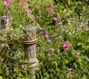nachhaltigeWildblumen2
