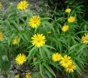 nachhaltigeWildblumen3