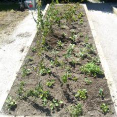 Bepflanzte Blumenbeete am Stehrerhof