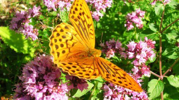 NEU! Einzelsaatgut von Wildblumen